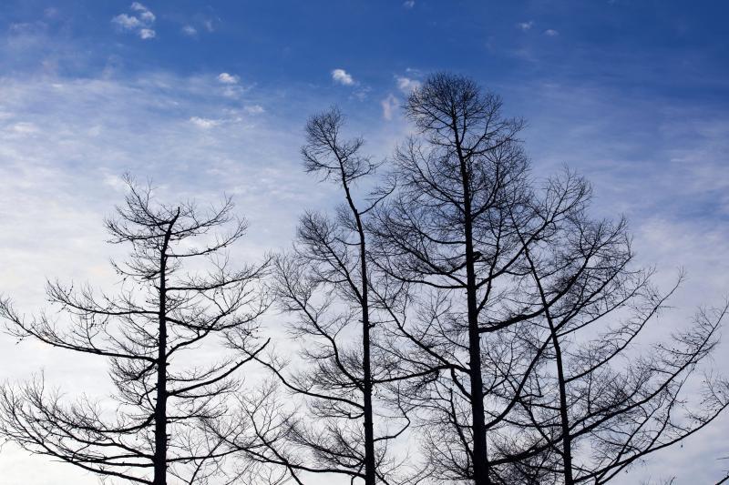 [ 冬の青 ]  空のブルーが美しい