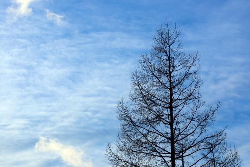 [ 孤独 ]  凍りつくような寒さの中の木です。