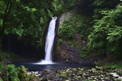 常連の滝 初夏| 緑豊かな滝風景です。