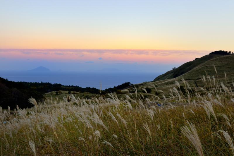 細野高原と利島 | ススキの草原の先に海と島が見えます。