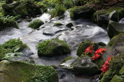 胴腹滝の清流| お盆の時期に花が添えられていました。