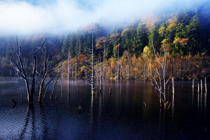 [ 自然湖の立ち枯れと紅葉 ]  立ち枯れが神秘的な世界を創り出しています。