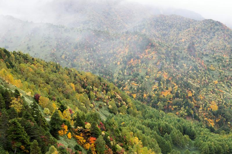 [ 志賀高原・のぞきの紅葉 ]  霧が出てきて幻想的です