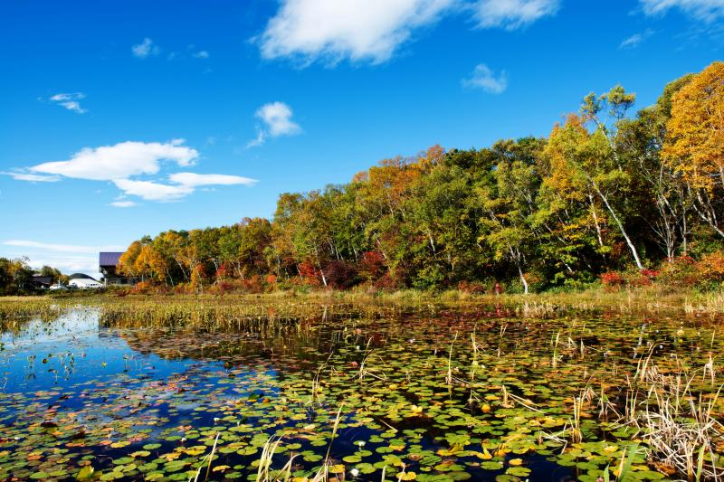 紅葉真っ盛りの蓮池 | 空が水に映っています。
