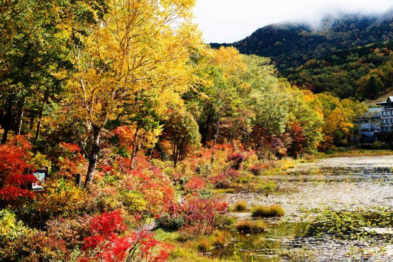 [ 蓮池の紅葉 ]  池周辺の樹々が見事に色付きます。