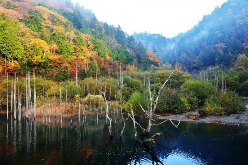 [ 自然湖の橋の逆側 ]  メインの撮影ポイントの逆側も素晴らしい立ち枯れになっている。