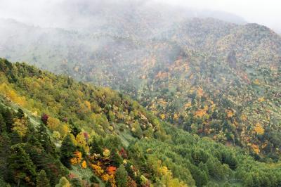 志賀高原・のぞきの紅葉| 霧が出てきて幻想的です