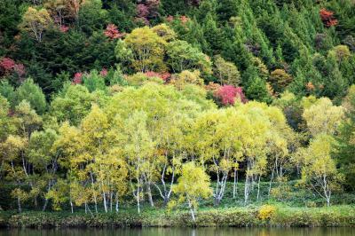 木戸池の紅葉| 湖畔の紅葉が綺麗です
