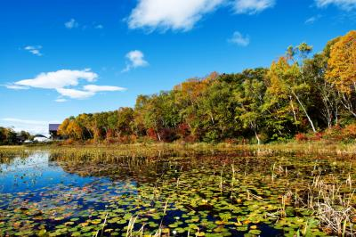 紅葉真っ盛りの蓮池| 空が水に映っています。