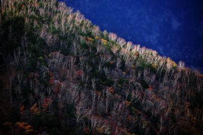 しらびそ高原| 枯れ紅葉の斜面