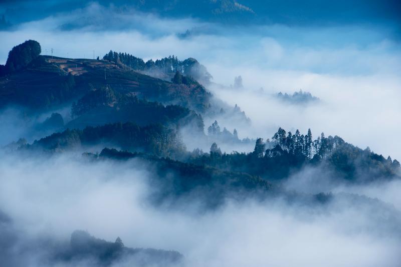 [ 雲海に浮かぶ茶畑 ]  雲海の中から茶畑が顔を出しています。