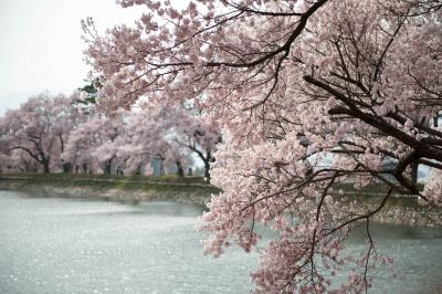[ 六道の堤の桜 ]  光る湖面と桜が綺麗です。