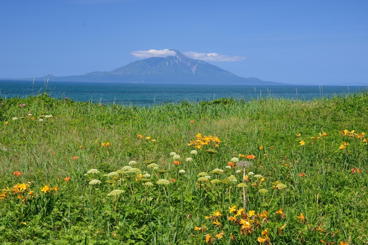 稚咲内海岸と利尻富士 稚咲内海岸から望む利尻富士とエゾカンゾウ。稚咲内海岸は海に浮かぶ利尻岳を望めるだけでなくエゾカンゾウの群生地としても有名。エゾカンゾウは6月20日~30日にピークを迎え、7月に入ると一気になくなっていく。