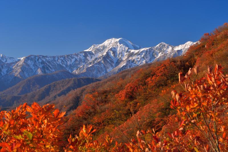 [ 初冠雪の越後駒ヶ岳 ]  撮影場所の登山道からは越後駒が綺麗に見えます。