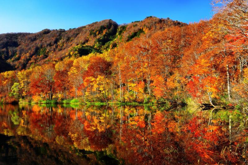 [ 白池 ]  蓮華温泉へ行く途中にある白池。ブナ林の紅葉が非常に美しい池です。湖畔沿いに遊歩道が整備され、様々な角度から紅葉を切り取れます。
