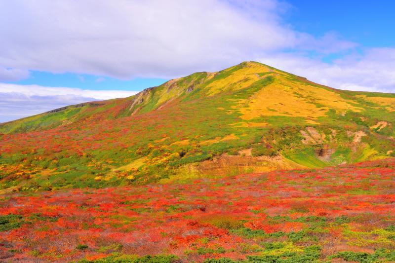 [ 東栗駒山からの景観 ]  裾野に広がる紅葉が栗駒山を引き立てていました。