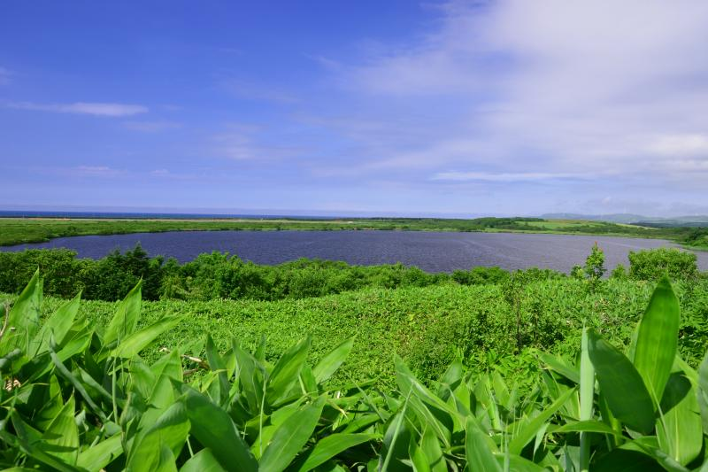 [ メグマ沼 ]  稚内空港近くにあるメグマ沼。熊笹に覆われた緑の美しい沼。