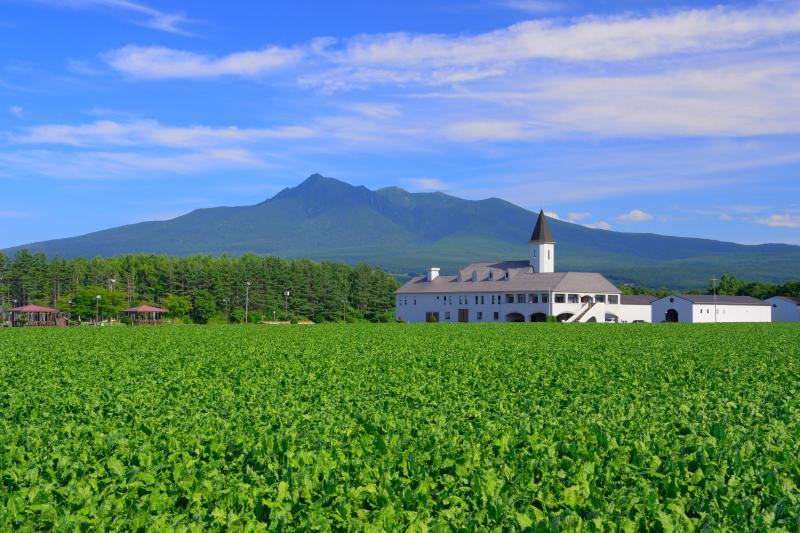 [ 清里町 ]  清里町からは斜里岳が美しく見えます。