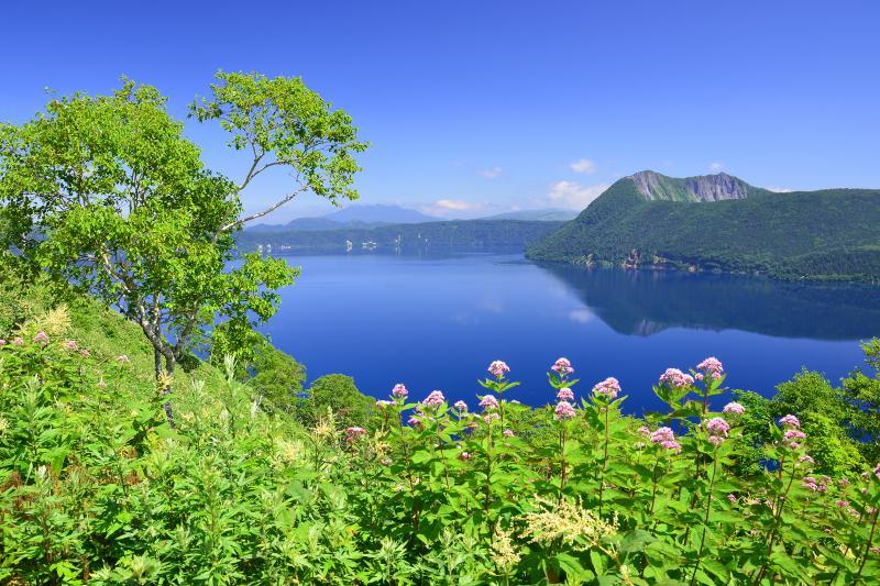 [ ヨツバヒヨドリ咲く摩周湖 ]  第一展望台の駐車場から登山道を少し歩くとヨツバヒヨドリの花が咲いていました。薄いピンク色の花が青い湖面にアクセントを与えていました。