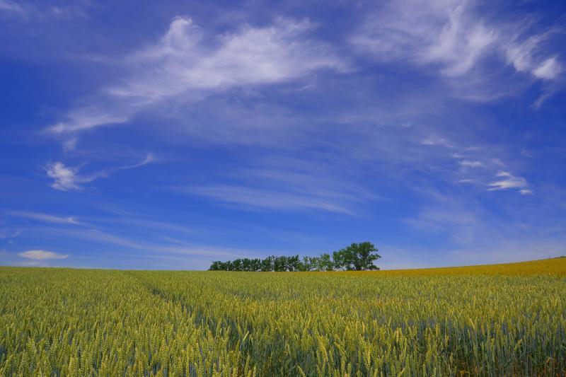[ 旧マイルドセブンの丘 ]  赤麦の丘からは昔のマイルドセブンの丘を望めます。