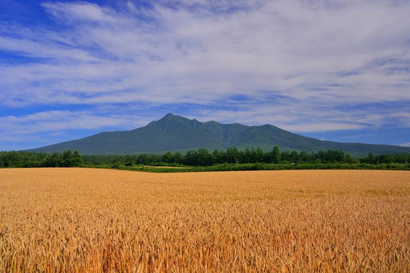 [ 麦畑と斜里岳 ]  麦色一色となった大地に斜里岳が鎮座する様に感動しました。