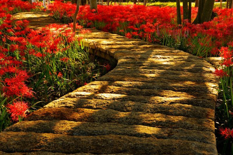 [ 朝の斜光 ]  御影石の遊歩道に差し込む光と影が美しい。