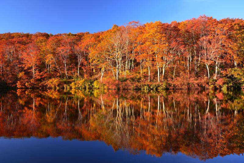 茶屋池 | 美しいブナ林を映し込む静寂な池