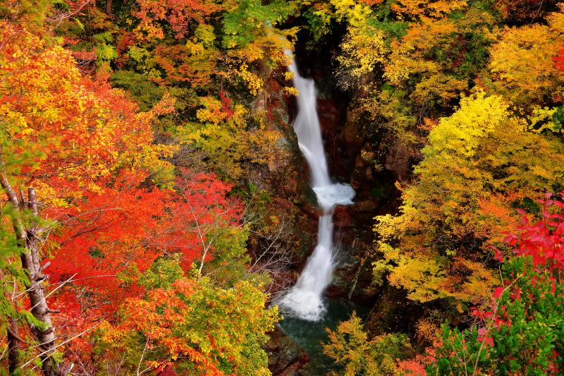 [ 蛇淵の滝 ]  秋の蛇渕の滝。遊歩道入口から少し下った展望台から撮影しました。