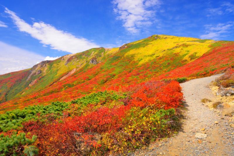 [ 栗駒山の秋 ]  宮城県側から見た山容は非常に整っています。