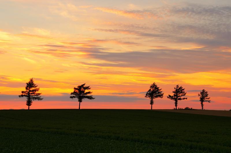 [ メルヘンの丘夕景 ]  丘の向こうの夕焼け空が綺麗でした。