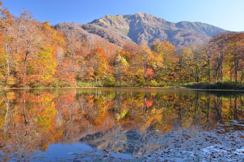 [ 刈込池紅葉 ]  秋の刈込池と白山三ノ峰。ブナ林に囲まれた小さくて静寂な池。上小池の駐車場から徒歩約50分。距離的に石段コースが近いが、急登できつい。登りは沢コースを選択するとよいだろう。