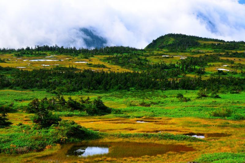 [ 湧き上がる雲 ]  山頂湿原の周りは切り立った深い谷に囲まれているので午前の遅い時間には四方を雲に囲まれて幻想的な空間に包まれることもあります。