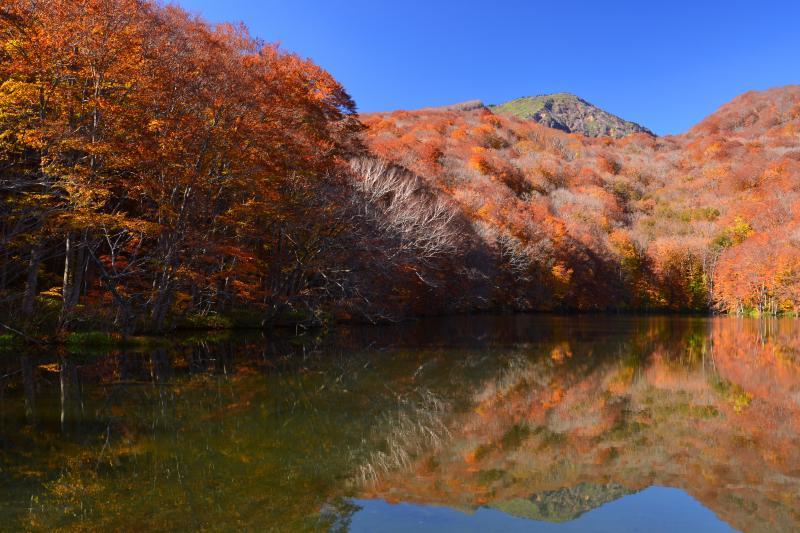 [ 蔦沼 と大岳 ]  八甲田山系に位置する蔦七沼は青森県屈指の紅葉スポット。遊歩道が整備されており1時間もあればすべての沼を散策できる。中でもブナ林と八甲田大岳を映しこむ蔦沼は最も人気が高い。