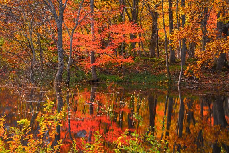 [ 天池湖畔の紅葉 ]  湖畔沿いのカエデの赤も綺麗です
