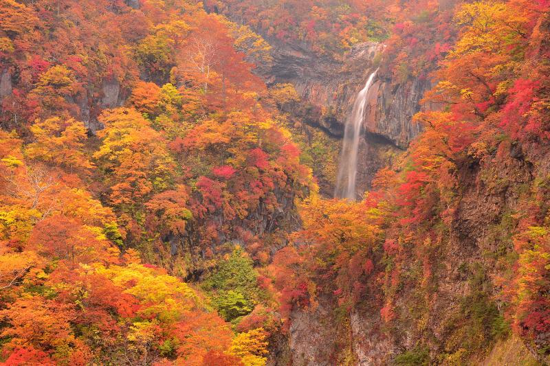 [ 大田切渓谷惣滝 ]  燕温泉から徒歩約10分で展望台へ。そこからは複雑な地形と錦秋の紅葉に囲まれた雄大な惣滝が望めます。