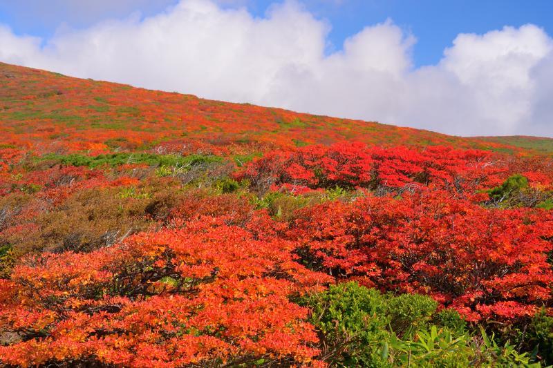[ スカイラインの紅葉 ]  色とりどりの紅葉に囲まれた稜線