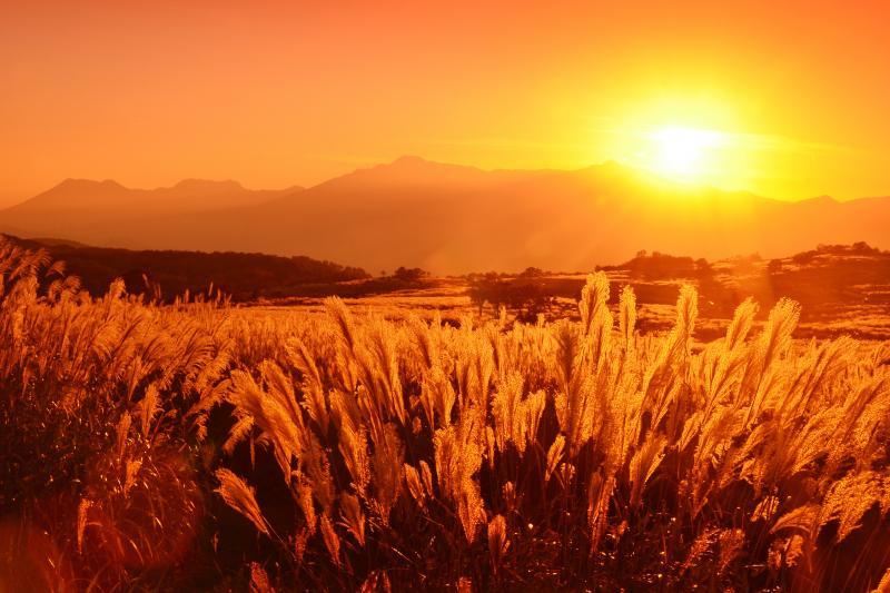 [ 光ヶ原 ]  夕刻の光を浴びたススキの野原が印象的