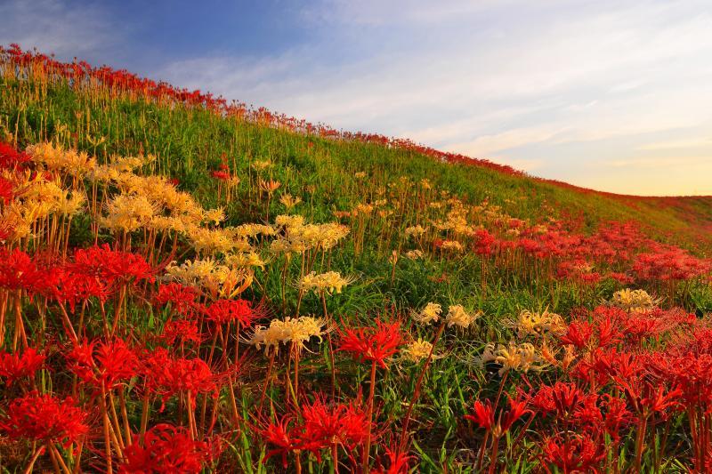 [ 朝の斜光 ]  早朝の斜光が花を鮮やかにしていました。