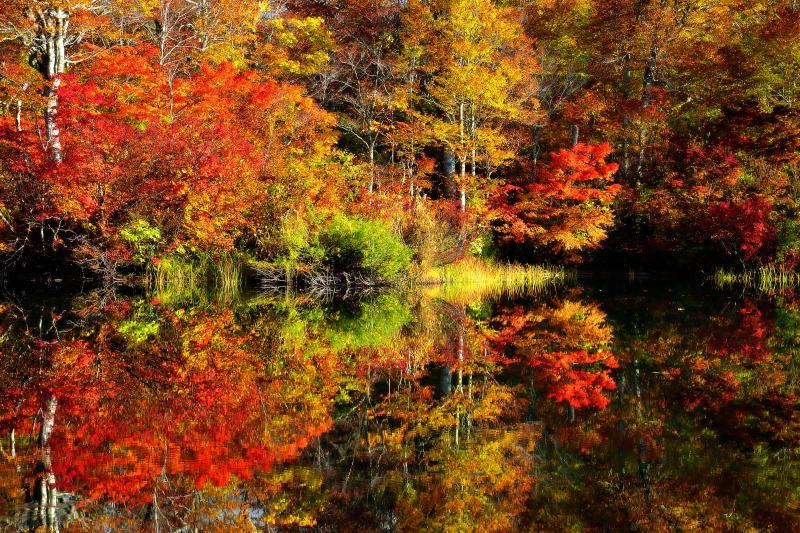 [ 鎌池 紅葉リフレクション ]  池の南側に小さな半島状の地形があり、開けた場所から鎌池を眺めることができます。水鏡に映える錦秋の鎌池の彩りが印象的でした。