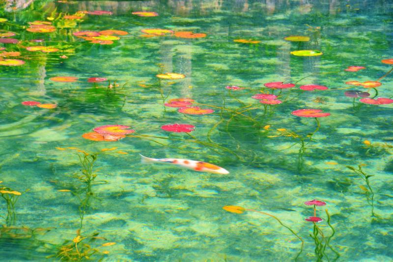 [ モネの池 ]  まるで印象派の絵画のようでした。