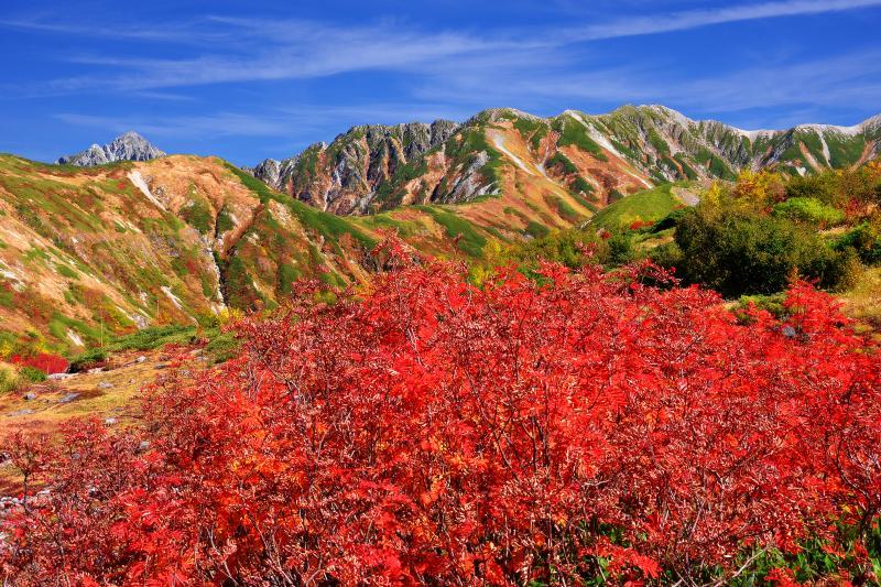 [ 立山連邦とナナカマド ]  天狗平から見た立山連峰。道路沿いのナナカマドが真っ赤に色づいていました。