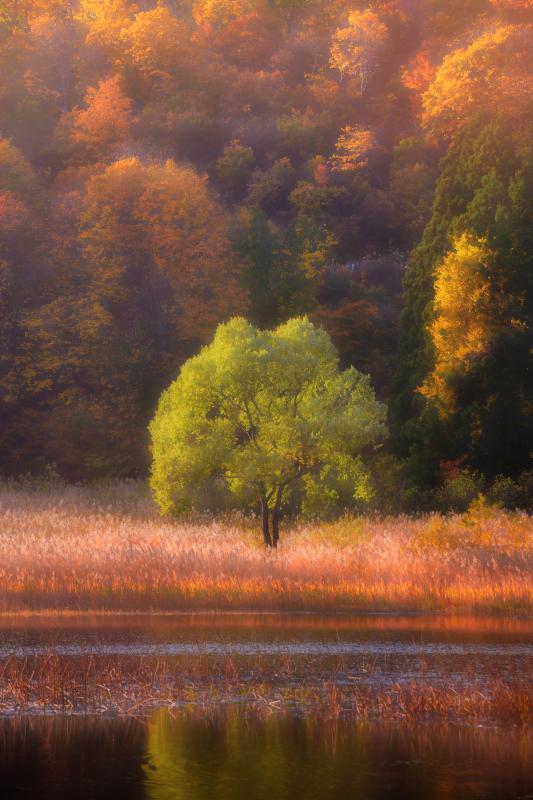 [ 夕刻の田茂木池 ]  湖畔に立つ鍋倉の貴婦人