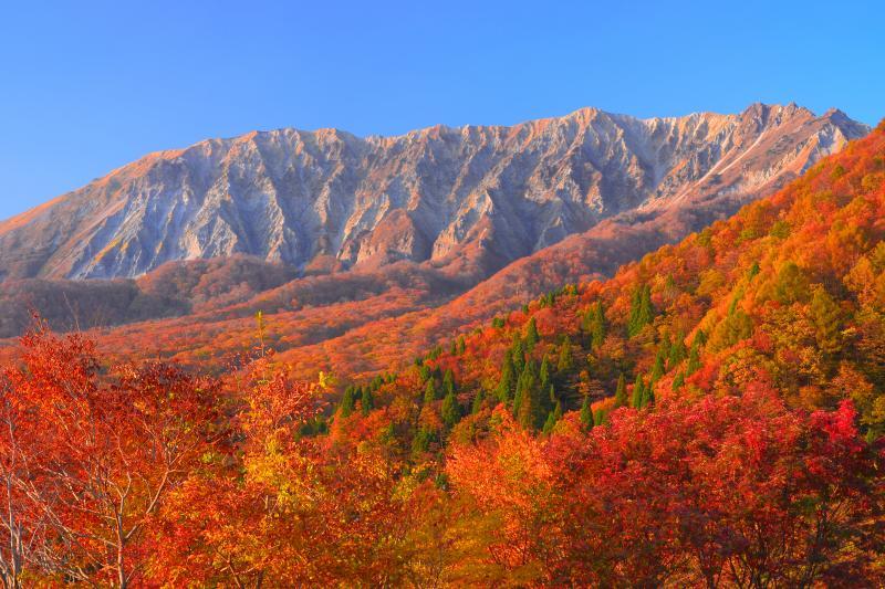 [ 伯耆大山 ]  鍵掛峠から見た南壁の紅葉は非常に美しいものでした。