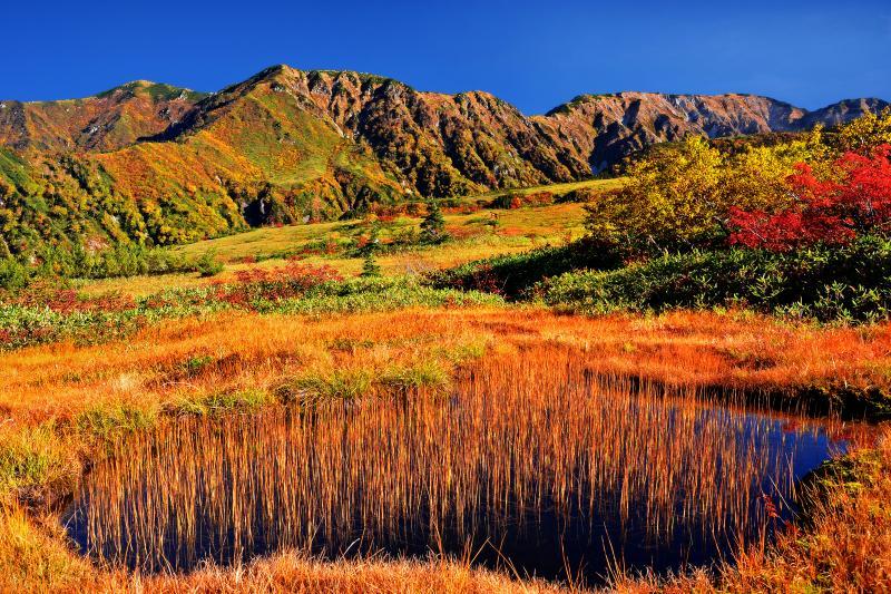 [ 立山の餓鬼田 ]  弥陀ヶ原の西端から見た餓鬼田と大日連峰。弥陀ヶ原内はナナカマドやダケカンバは少ないが地糖と草紅葉が美しい。
