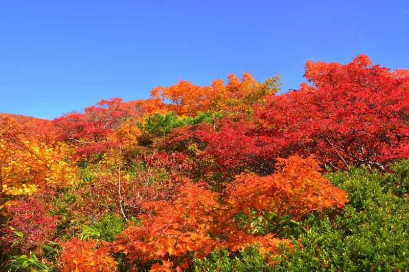 [ 妍を競う木々の紅葉 ]  多様な色彩の変化に山の紅葉の機微を感じます。