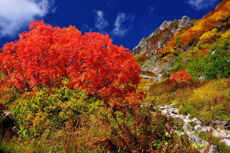 [ 赤に萌えるナナカマド ]  天狗原から槍沢に戻る登山道沿いにも真っ赤に色づいたナナカマドが点在している。