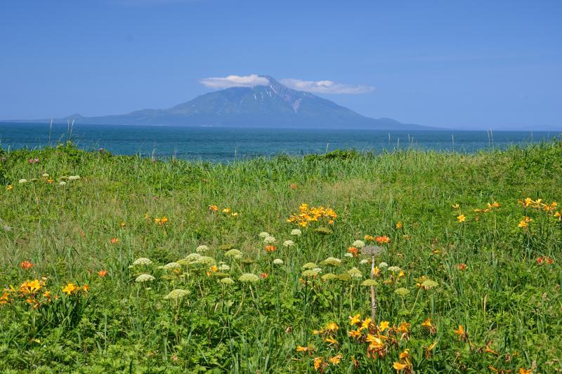 [  稚咲内海岸と利尻富士 ]  稚咲内海岸から望む利尻富士とエゾカンゾウ。稚咲内海岸は海に浮かぶ利尻岳を望めるだけでなくエゾカンゾウの群生地としても有名。エゾカンゾウは6月20日~30日にピークを迎え、7月に入ると一気になくなっていく。