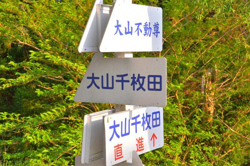 [ 大山千枚田 ]