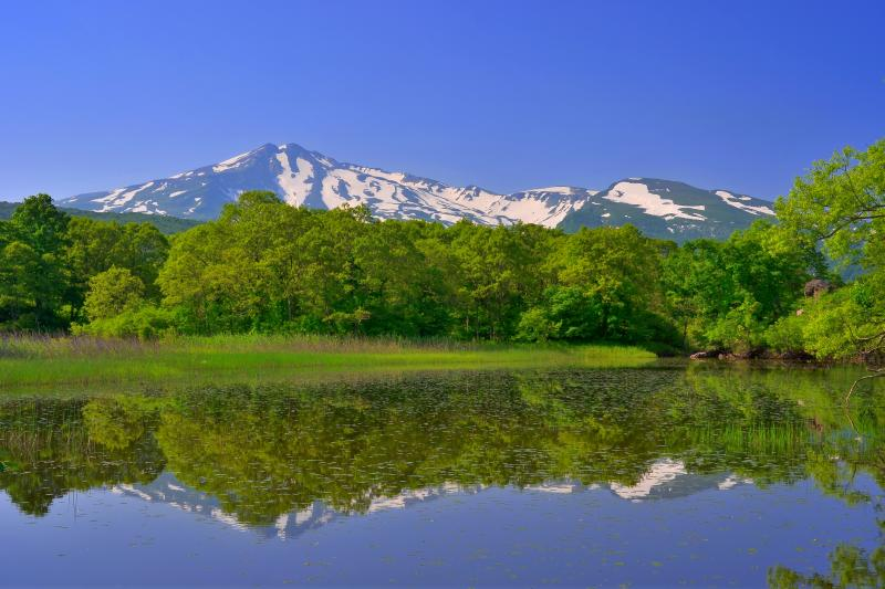 [ 扇谷地溜池右岸 ]  水草の綺麗な湖畔です。