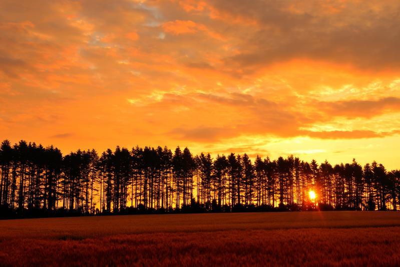[ 女満別大東地区 ]  並木越しに差し込んでくる朝日が綺麗でした。